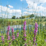 Biodiversiteit en permacultuur (in eigen tuin en landschap)