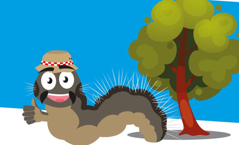 De eikenprocessierups op natuurlijke wijze bestrijden!