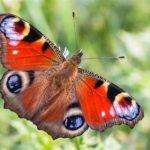 Vlinders in hun omgeving